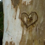 carved heart tree sm